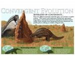 Pangolin-Anteater