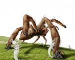 mantispids boarding jumping spider