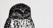 my owl thumbnail